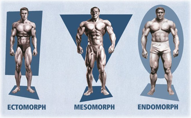 Somatotype-Men